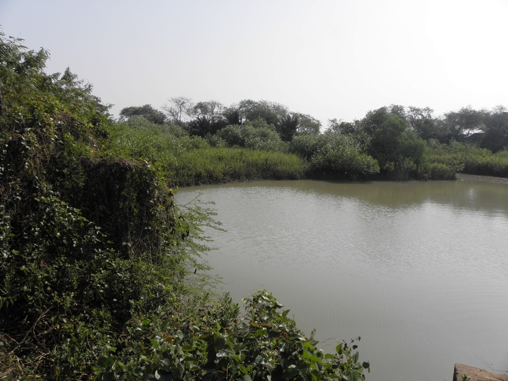 Mangro Project - Nature Reserve