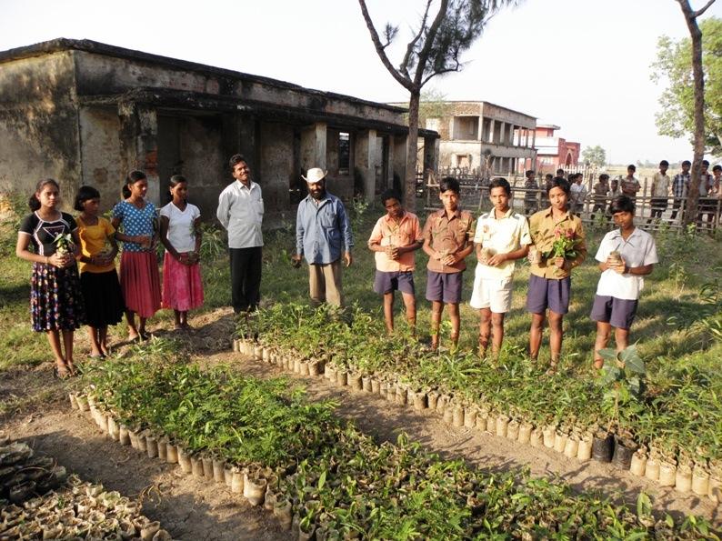 Mangro - Tree Nursery