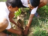 Mango Project - Tree Planting